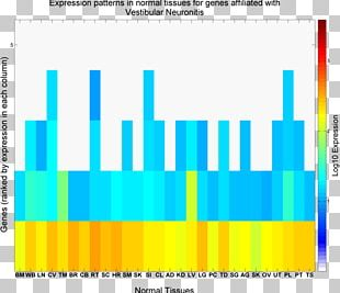 Vestibular System Book Writer Space Acceleration Central Nervous System PNG