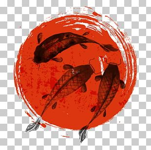 Koi Japan Drawing Illustration PNG