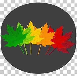 Maple Leaf Autumn Leaf Color Tree PNG