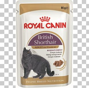 British Shorthair Cat Food Dog Kitten Maine Coon PNG