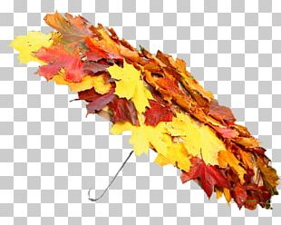 Autumn Summer Portable Network Graphics Spring PNG