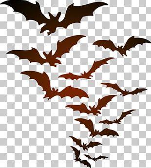 Halloween YouTube Bat PNG