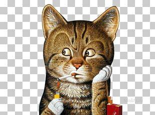 Cat Mat Carpet Kitten Frames PNG
