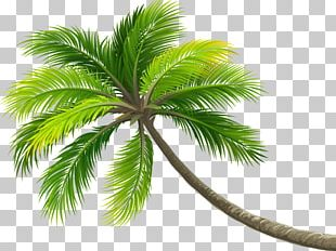 Coconut Tree Arecaceae Computer File PNG