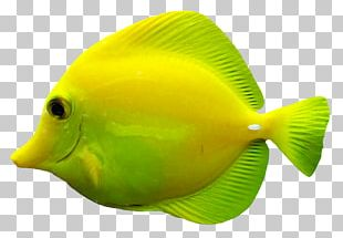 Wall Decal Sticker Coral Reef Fish Marine Biology PNG