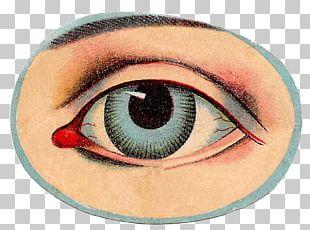 Human Eye Human Body Anatomy PNG