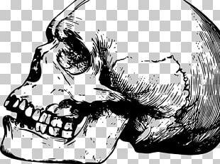Skull Fracture Bone Human Skull Symbolism Shape PNG