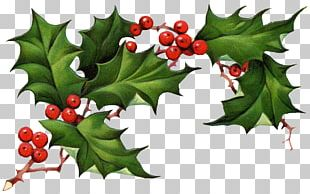 Common Holly American Holly Christmas Holly King PNG