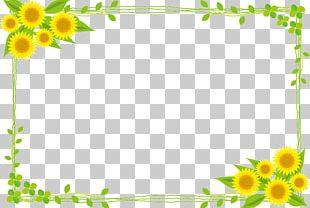Common Sunflower Public Domain Illustration PNG
