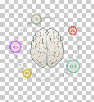 Human Brain Cerebrum PNG