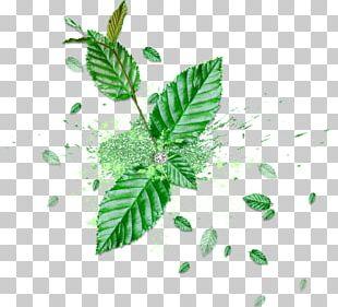 Leaf Green Blog PNG