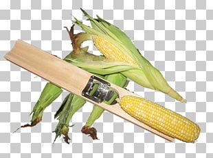 Corn On The Cob Sweet Corn Commodity PNG