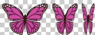 Butterfly Wing PNG