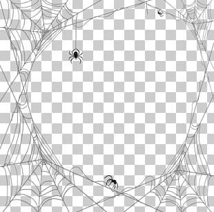 Spider Web Theridiidae PNG