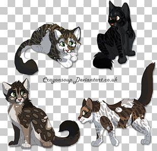 American Wirehair Kitten Work Of Art PNG