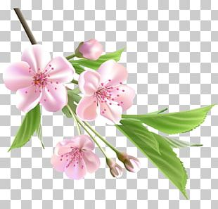 Flower Drawing Tree PNG