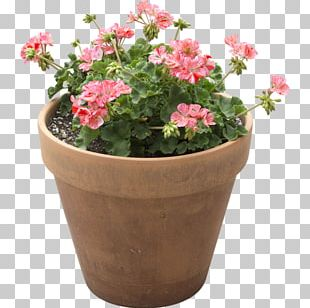 Flowerpot Houseplant Light + Building PNG