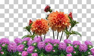 Dahlia Flower Garden Flower Garden Desktop PNG
