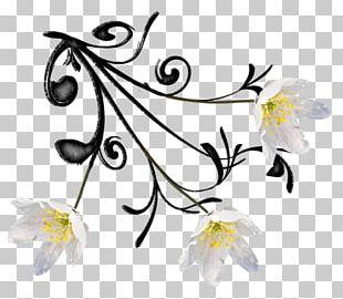 Floral Design Cut Flowers Plant Stem PNG