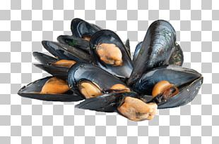 Blue Mussel Bivalvia Bony Fishes Clam Oyster PNG