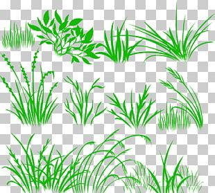 Herbaceous Plant Drawing Desktop PNG