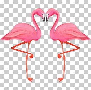 Bird Greater Flamingo American Flamingo PNG