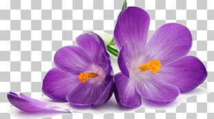Purple Flower Stock Photography PNG