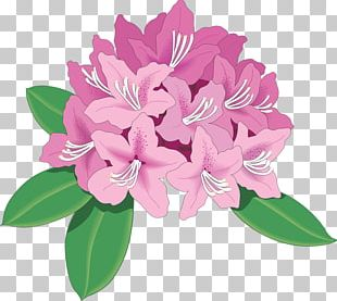 Rhododendron Azalea Drawing PNG