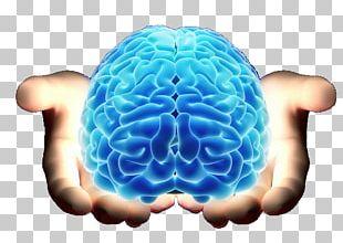 Brain Neurology Cerebrum Agy PNG