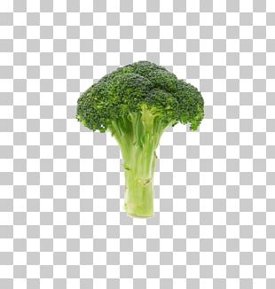 Broccoli Vegetable Icon PNG