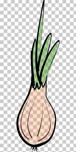 Shallot Vegetable Garlic Chives PNG