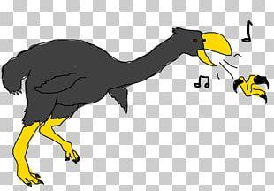 Bird Of Prey Beak Fauna PNG