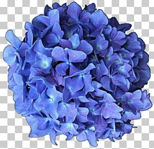 French Hydrangea Flower Blue Lilac PNG