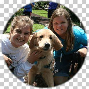 Golden Retriever Puppy Dog Breed Companion Dog PNG