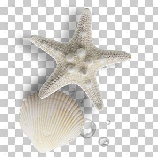 Seashell Gratis Pearl PNG