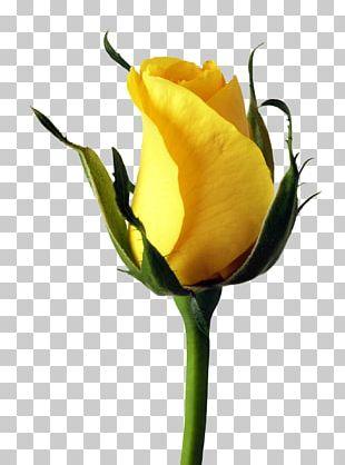 Garden Roses PNG