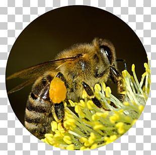 Bee Pollen Insect Honey Bee Pollen Basket PNG
