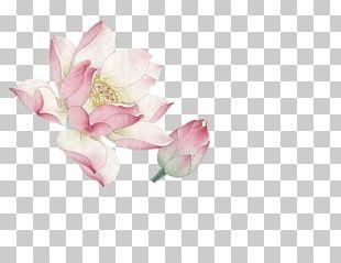 Flower Nelumbo Nucifera PNG