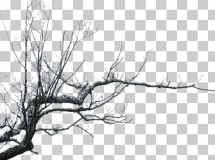 Branches PNG