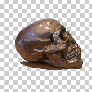 Bronze Sculpture Skull PNG