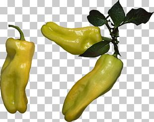 Serrano Pepper Pasilla Yellow Pepper Friggitello Bell Pepper PNG
