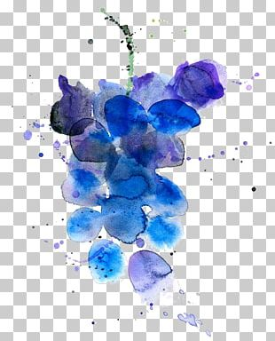 Wine Grape Watercolor Painting Fruit Illustration PNG