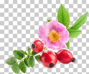 Sweet-Brier Rose Hip Seed Oil Skin Rose Oil PNG