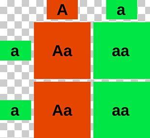 Punnett Square Biology Genotype Dominance Phenotype PNG