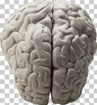 Brain Research Neuroscience Biology Working Memory PNG