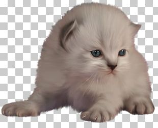 Cat Kitten Blog PNG