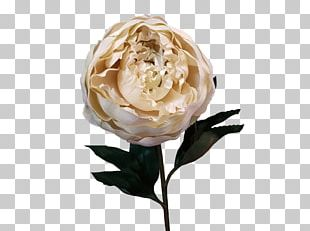 Garden Roses Cut Flowers Artificial Flower Centifolia Roses PNG