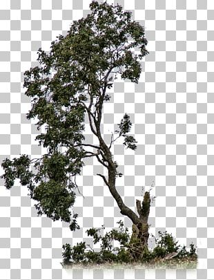 Out-Tree Branch Shrub PNG