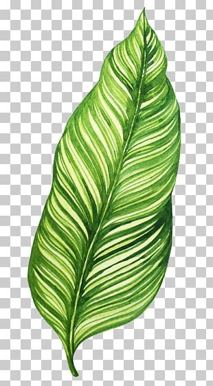 Banana Leaf Food Salsa PNG