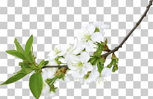 Branch PNG